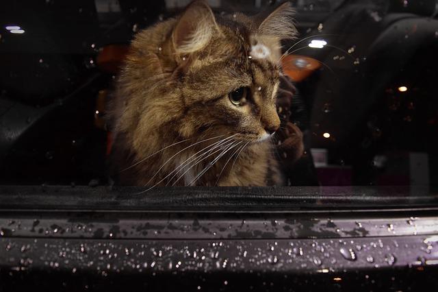 umzug mit katze hund hamster